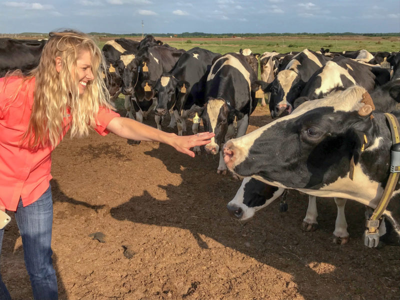 Courtney Campbell socializes with cows at C&M Rucks Dairy